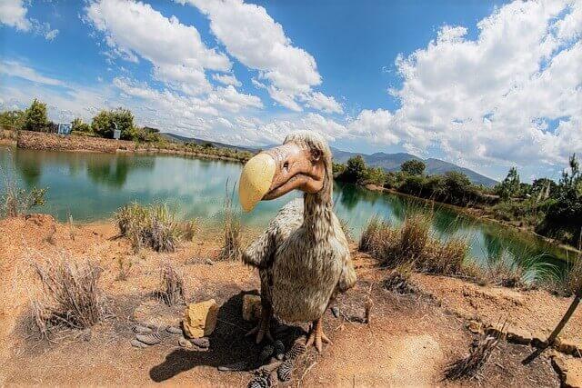 Artists Impression of a Dodo