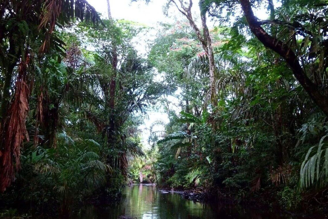 One Wild Thing Tortuguero Rainforest