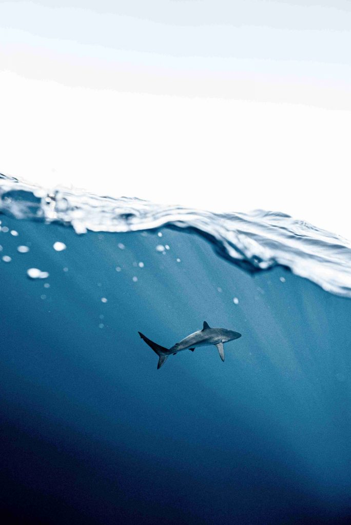 What is wildlife conservation? Sharks could face extinction.