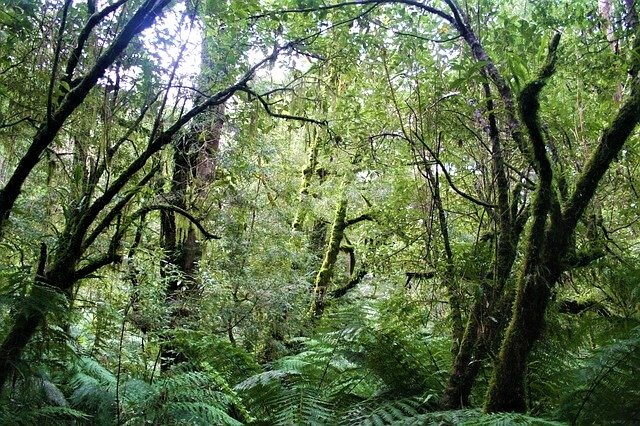 A biodiverse jungle with lots of different plant species