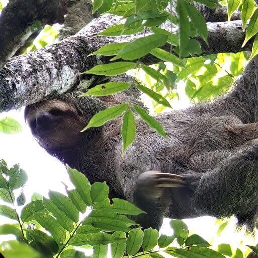One Wild Thing Exotic Animal Sloth