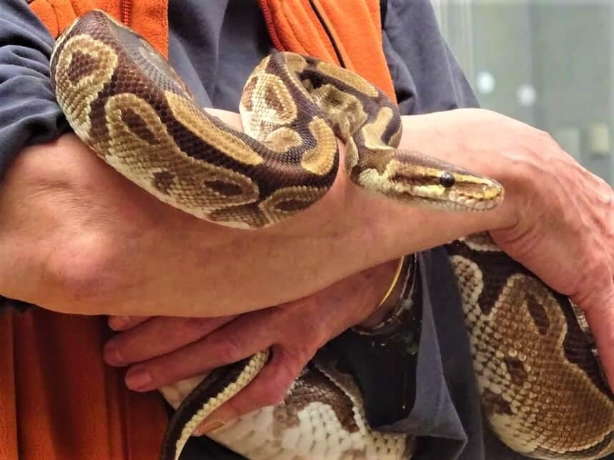 One Wild Thing Exotic Pet Trade Snake
