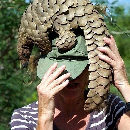 One Wild Thing Wildlife Trade Pangolin Tagged