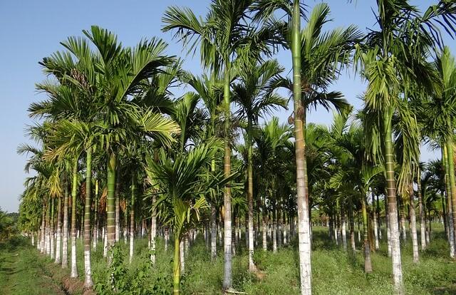 Palm plantation leading to habitat fragmentation