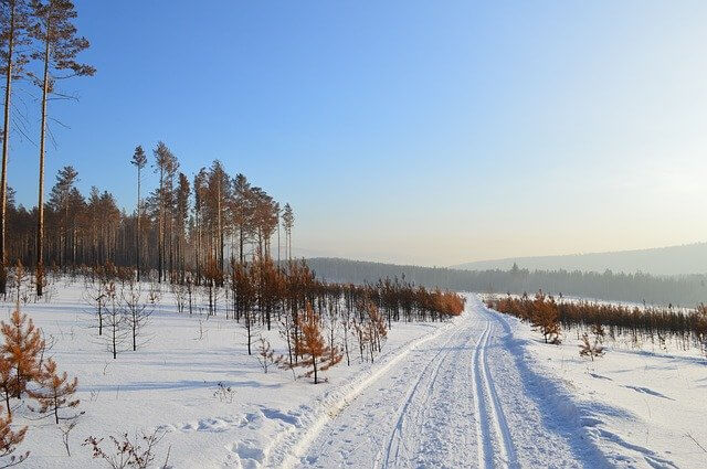 A snowy landscape with sparse trees- Bringing back mammoths could change this