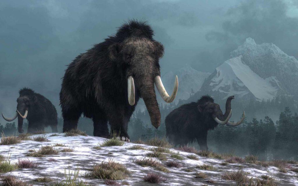 Three mammoths