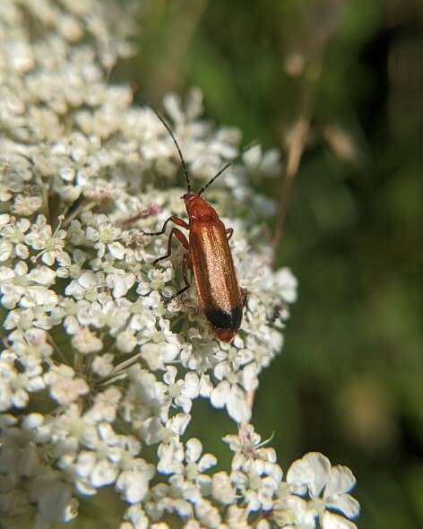 Insects- essential when trying to rewild your garden