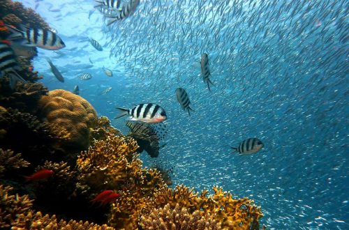 Fish on a coral reef