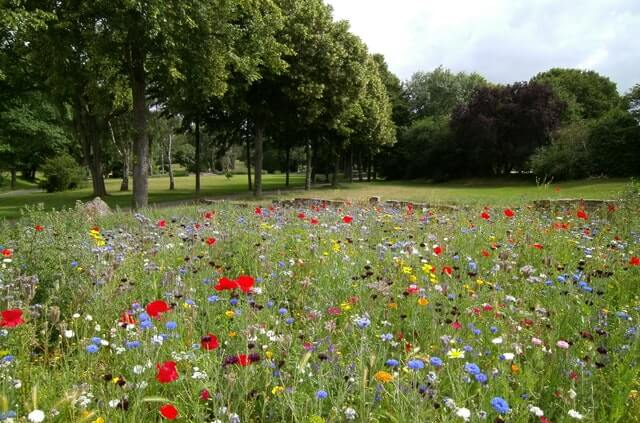 Park full of wildflowers- these could be a big part of the nature recovery network.