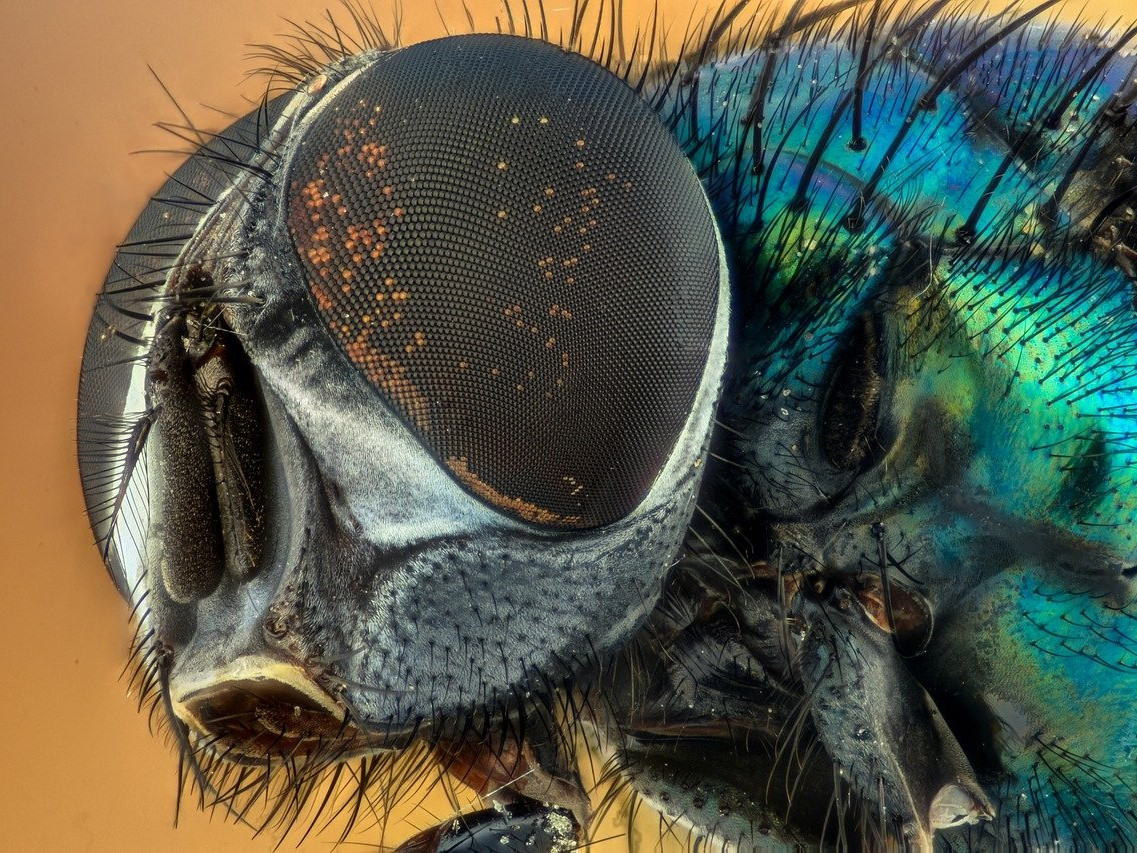 Human Disconnection with nature- close up fly
