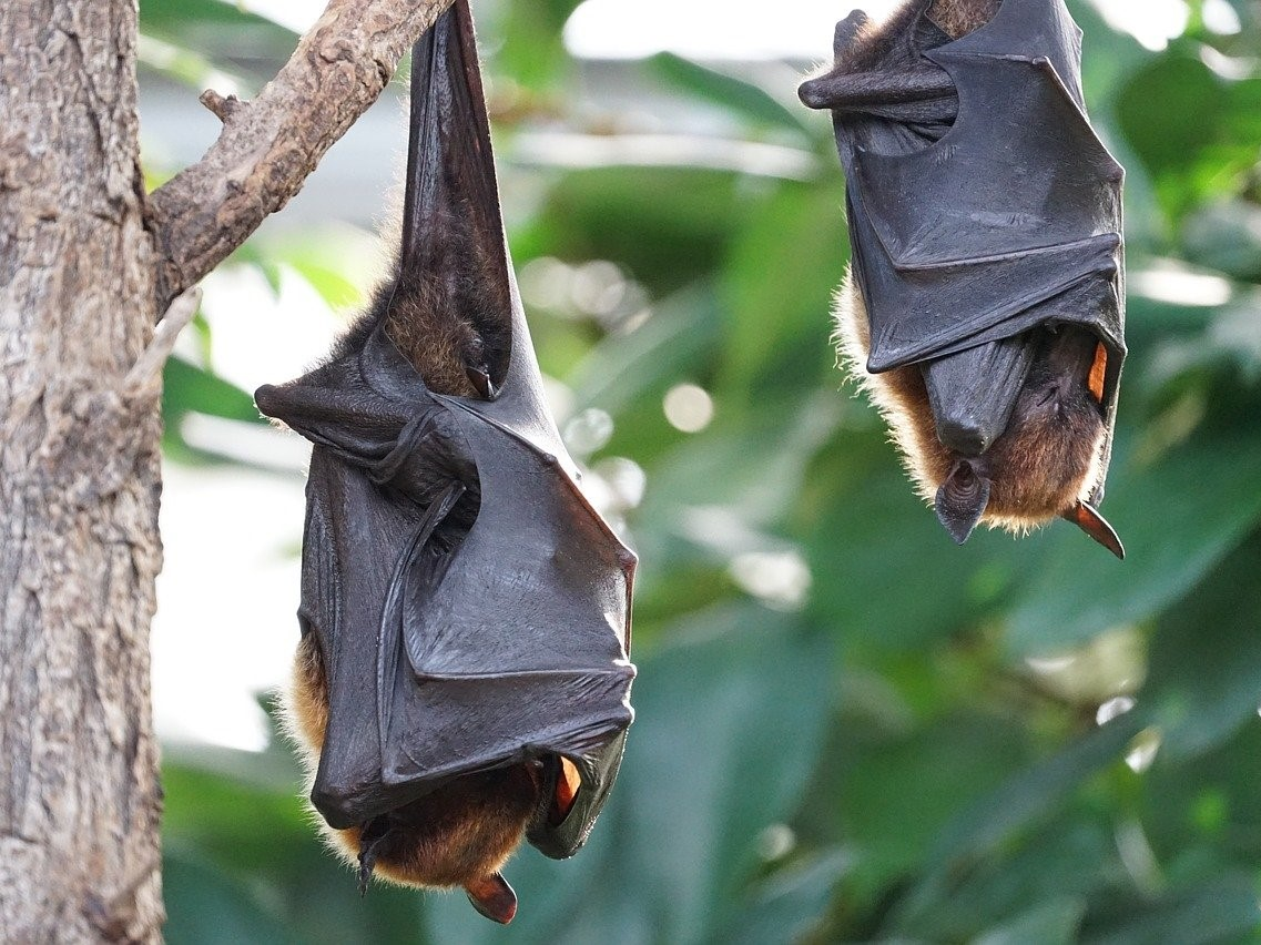 Bats were at the heart of wildlife conservation issues in 2020