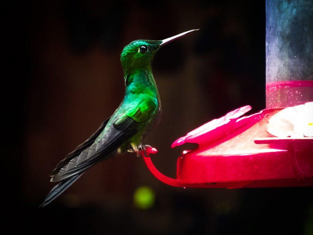 Hummingbird from Monteverde cloud forest