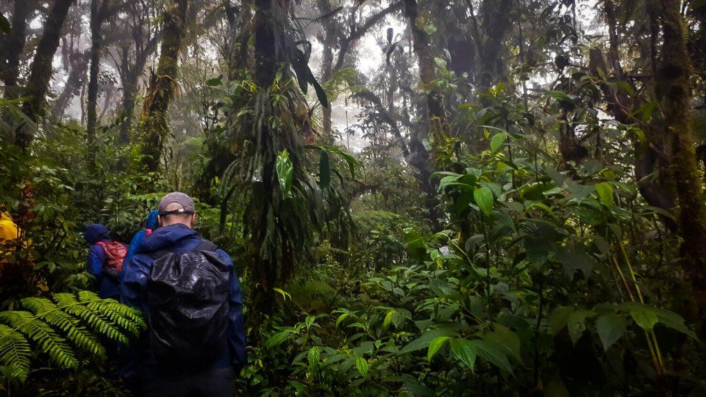 Walking in the Santa Elena reserve in the Monteverde Cloud Forest